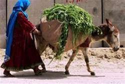donkey lover