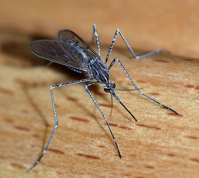 mosquito west nile virus israel
